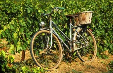 Niagara Winery Bike Tour