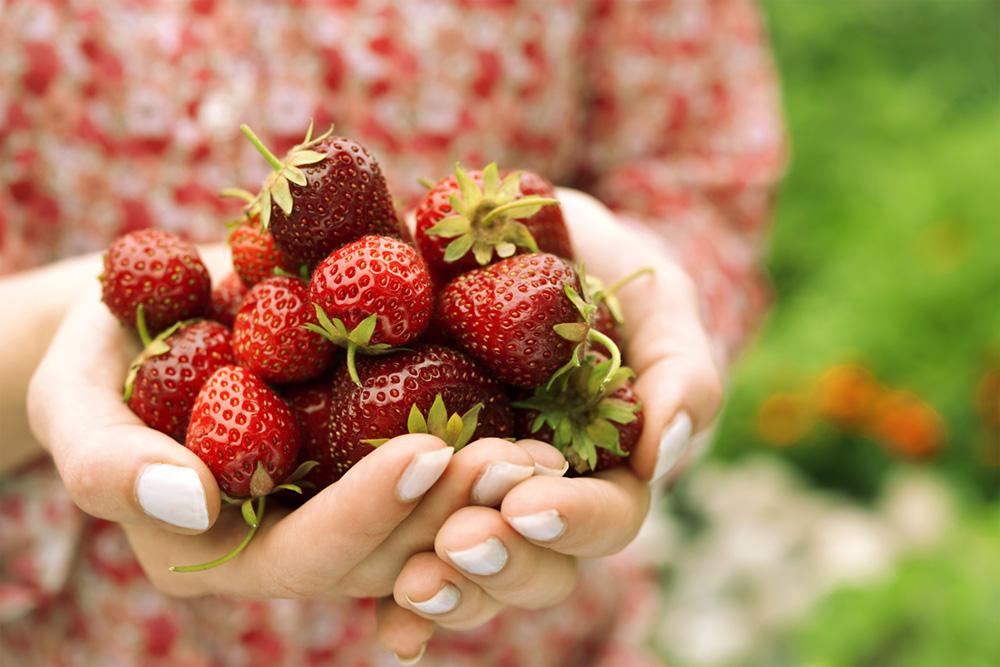 niagara produce