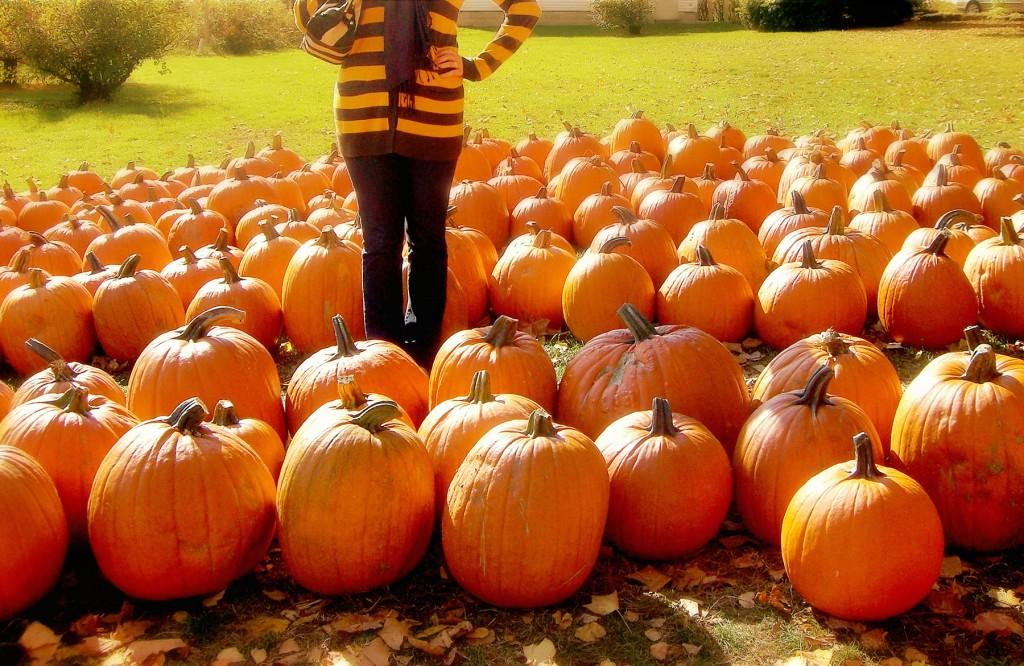 pumpkin patch niagara